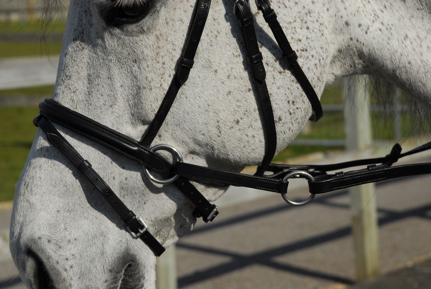Rhinegold Anatomical Crossover Bitless Bridle